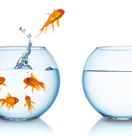 Ein Fisch springt von einem Goldfischglas ins andere